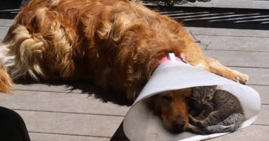 15 Photos Of Animals Who Don't Seem Not Very Happy About Their Cone Of Shame