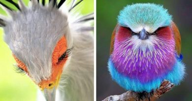 15 Pics Of Stunningly Beautiful Birds Who Seem To Have Arrived From Another Planet
