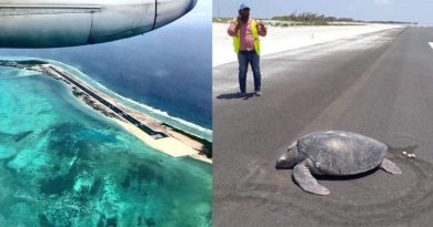Sea Turtle Returning To The Beach Finds Airport Instead And Ends Up Laying Eggs On Tarmac