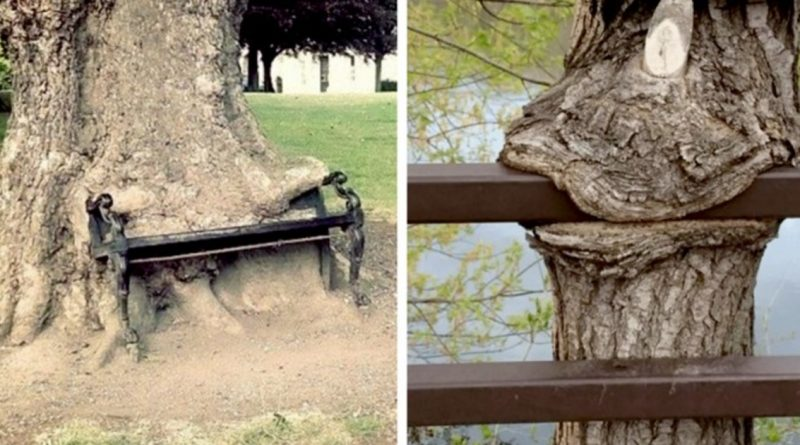 11 Weird Photos Of Trees Eating Everything In Front Of Them