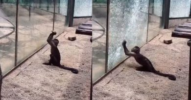 Footage Shows Monkey Shattering Glass Enclosure With A Sharpened Rock In A Zoo In China