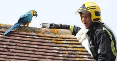 """Potty-Mouthed Parrot Tells Firefighter To """"F*ck Off"""" During Rescue Attempt"""