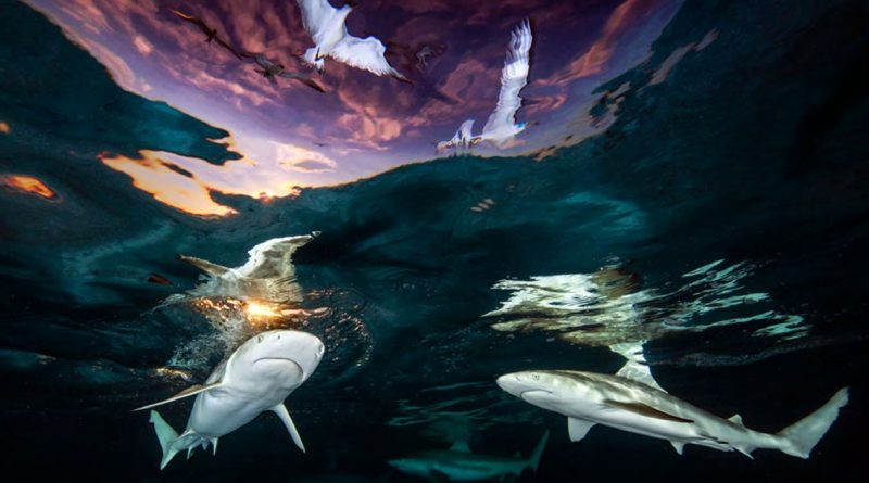 20 Stunning Photographs From The 2021 Underwater Photographer Of The Year Competition