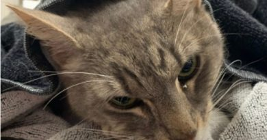 Arthur The Heroic Pet Cat Sacrifices Life To Protect Two Children From Deadly Snake Bite