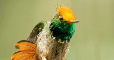 19 Birds That Seem Fake But Are Actually Real