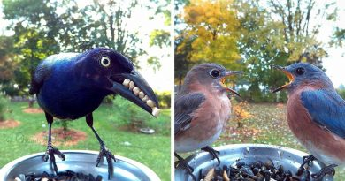Woman Puts Up A Bird Feeder With A Cam For Birds, And The Results Are Mesmerizing