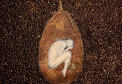 Ecological Burial Pods Turn Human Bodies To Trees