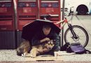 """15 Photos That Evoke Why We Call Dogs """"Man's Best Friend"""""""