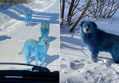 Pack Of Dogs With Bright Blue Fur Sighted Near An Abandoned Chemical Factory In Russia