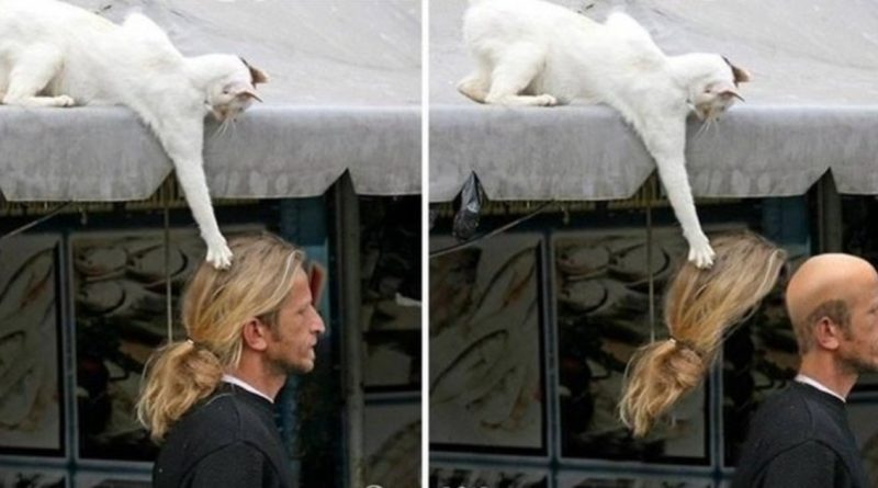 16 Photos That Prove Cats Will Always Be Cats Around Humans