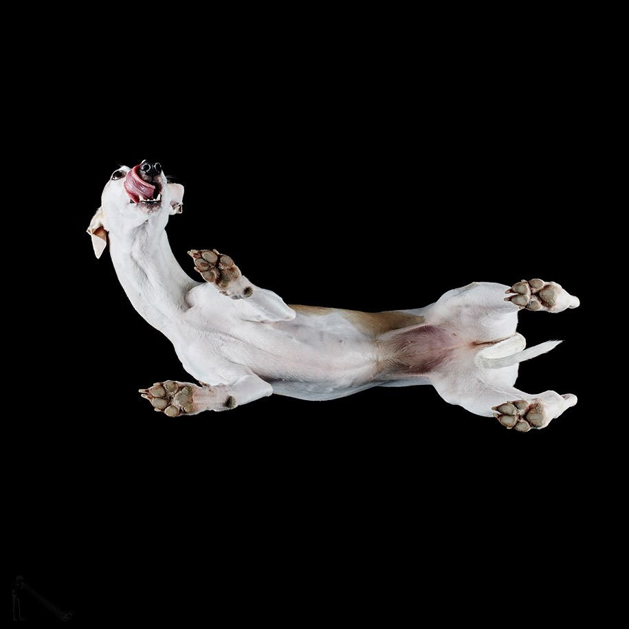 Dogs From Below