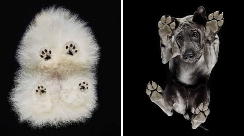 Under-Dogs : Photographer Shows How Dogs Look From Underneath