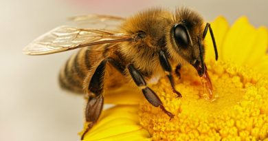 The Importance Of Bees: Humans Can't Survive Without Them