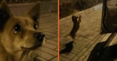 Stray Dog Appears To Be Moved To 'Tears' After Getting Food From A Stranger