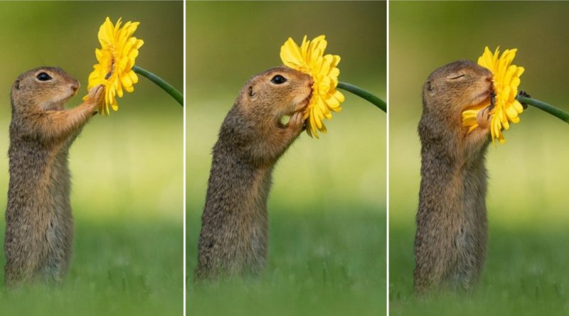 Dutch Photographer Captures The Moment A Squirrel Stopped To Smell A Daisy