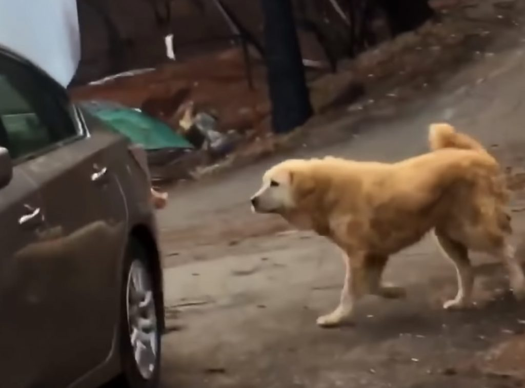 Dogs Waits For Family