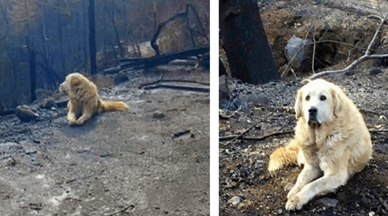 Woman Returns Home A Month After Camp Fire And Finds Her Pet Dog Awaiting Her Return