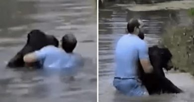 Man Leaps Over Enclosure To Rescue Drowning Chimp As Zoo Keepers Refuse To Help